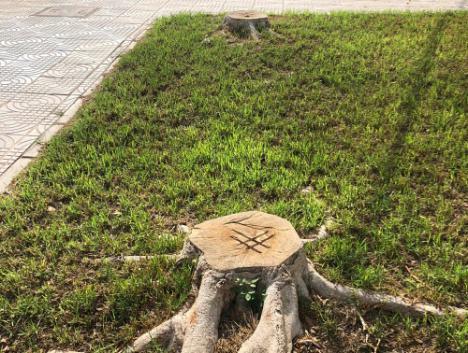 """El PP denuncia la """"tala indiscriminada"""" de árboles en parques y vías de La Mojonera"""