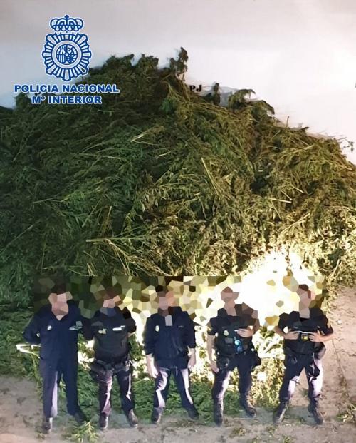 Incautadas 10.170 plantas de marihuana en pleno secado en una nave de El Ejido