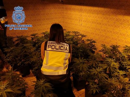 La Policia Nacional detiene a dos hombres e interviene 310 plantas de marihuana