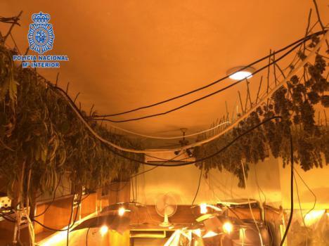 El olor conduce a la Policía hasta 180 plantas de marihuana
