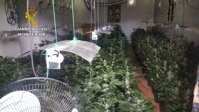 La Guardia Civil localiza más de 1000 plantas de marihuana y detiene a dos personas