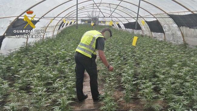 La Guardia Civil interviene más 24000 plantas de marihuana en la provincia de Almería