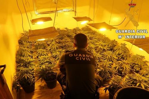 Intervenida una plantación indoor de marihuana en Roquetas de Mar