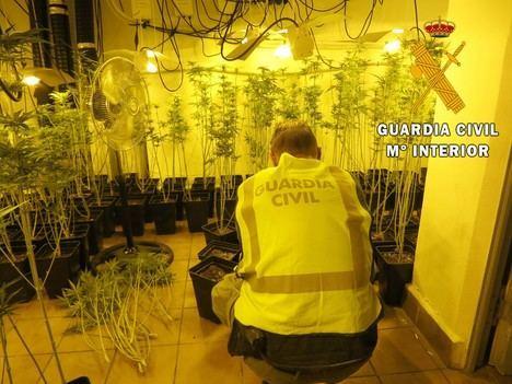 Una vivienda de lujo ocultaba 288 platas de marihuana en Roquetas de Mar
