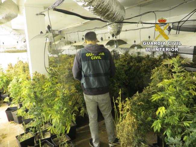 Incautadas 425 plantas de marihuana en Balanegra