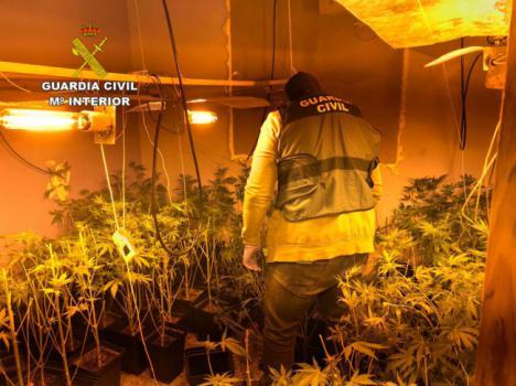 Dos detenidos y 400 plantas de marihuana intervenidas