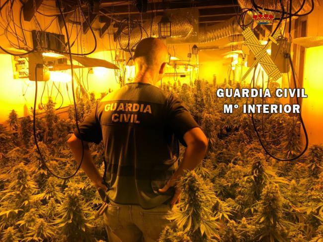 390 plantas de marihuana a 50 metros de un parque infantil