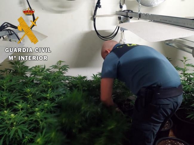 Detenido en un cortijo de Senés con 200 plantas de marihuana
