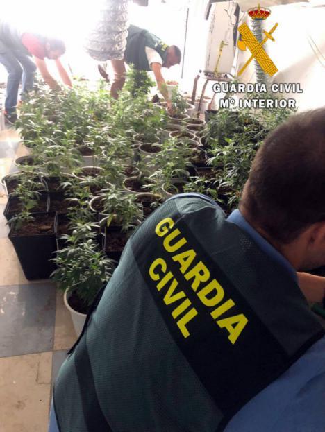 220 plantas de marihuana en una vivienda de Roquetas