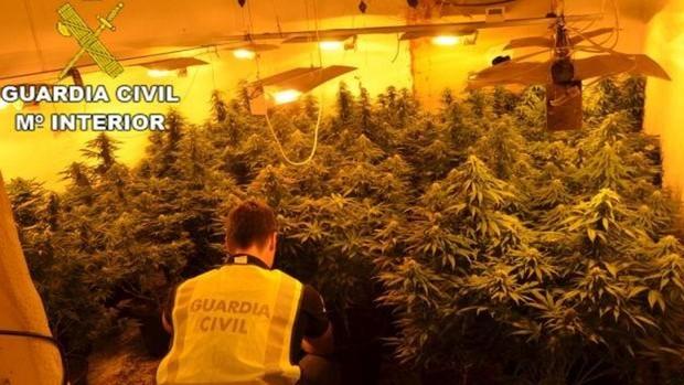 Detenido un vecino de Vícar que acudía a diario a El Ejido a atender su plantación de marihuana
