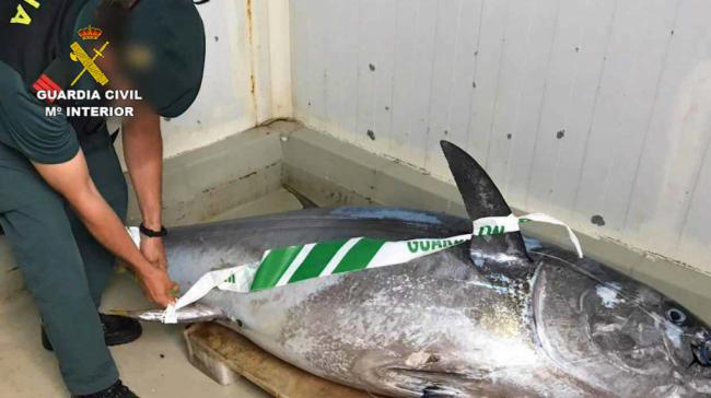 12 detenidos por pesca ilegal de atún rojo