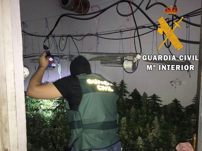 Pareja de sexagenarios regentaban una plantación de marihuana en Roquetas