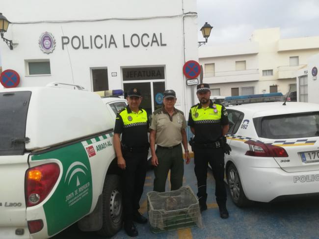 La Policía Local de Carboneras rescata un Búho Real en Los Vicentes