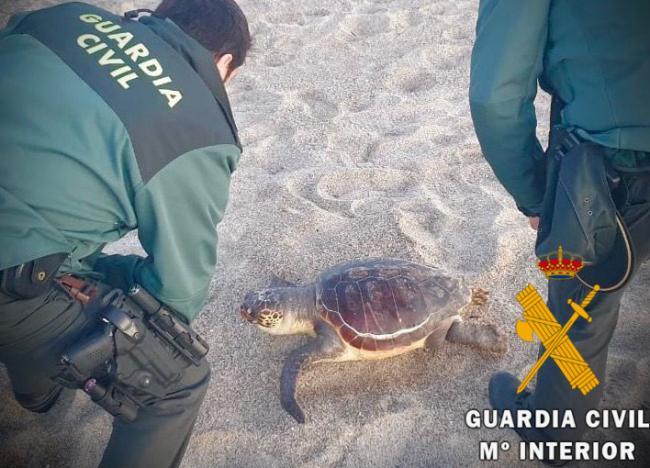 Guardia Civil recupera una tortuga en playa Serena de Roquetas de Mar.