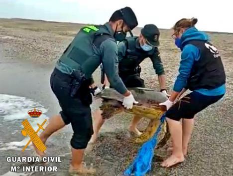 Equinac y Guardia Civil salvan a una tortuga boba enredada en una red de pesca
