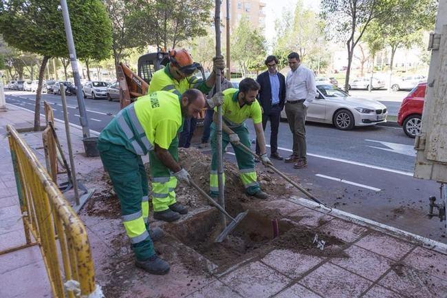 El Ayuntamiento repone más de 600 árboles y elimina 300 alcorques sin uso