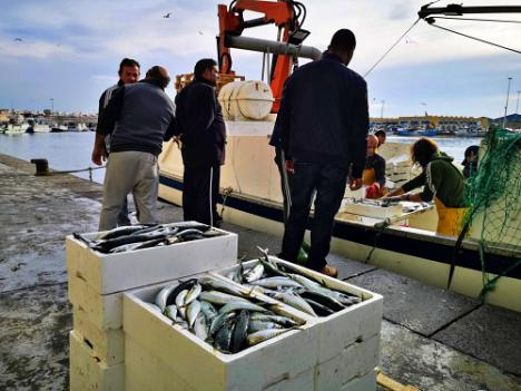El desembarco de pescado en la Lonja del Puerto de Almería cayó un 5,9% el pasado año