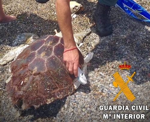 Rescatan el cadáver de una tortuga boba frente al Club de Mar de Almería
