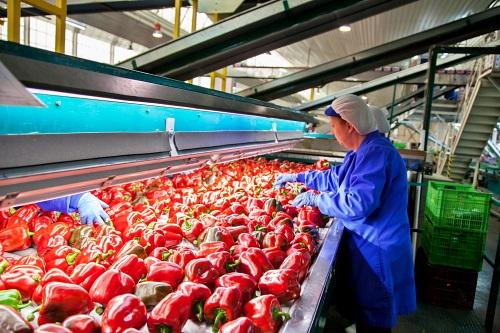 Almería se mantiene como líder andaluza en exportación hortícola