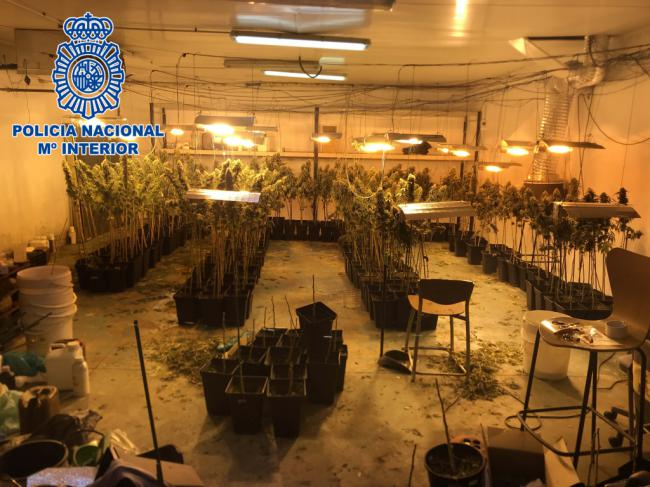 Dos detenidos por hacer de una nave industrial de Huércal una factoría de marihuana