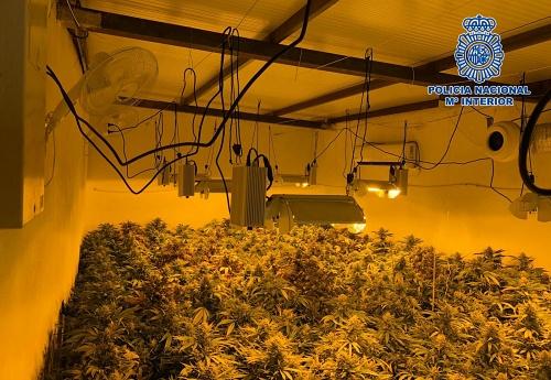 Descubren una plantación de marihuana con 1.461 plantas en un cortijo de La Juaida