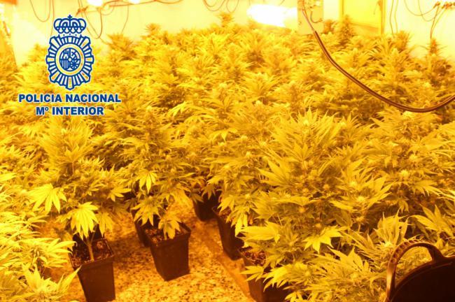 Un radio patrulla de la Policia halla 90 plantas de marihuana en una vivienda