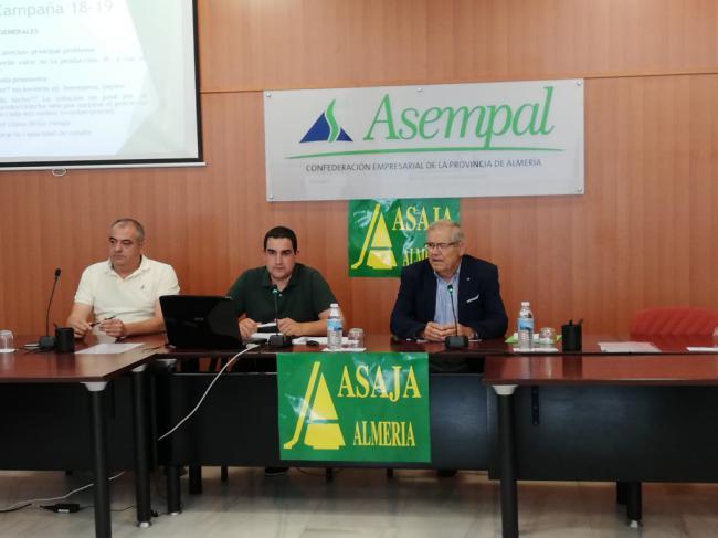 La producción hortícola de Almería baja un 8% y los precios un 3%