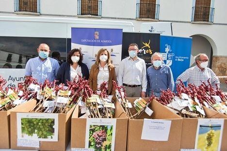 Diputación y 'Sabores Almería' apuestan en Berja por la conservación de la uva de Almería