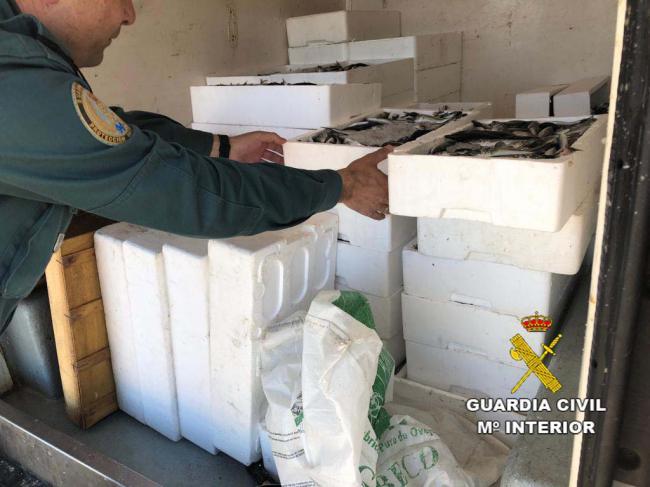 La Guardia Civil interviene más de 500 Kg. de pescado y 75 paños de redes de trasmallo en dos actuaciones