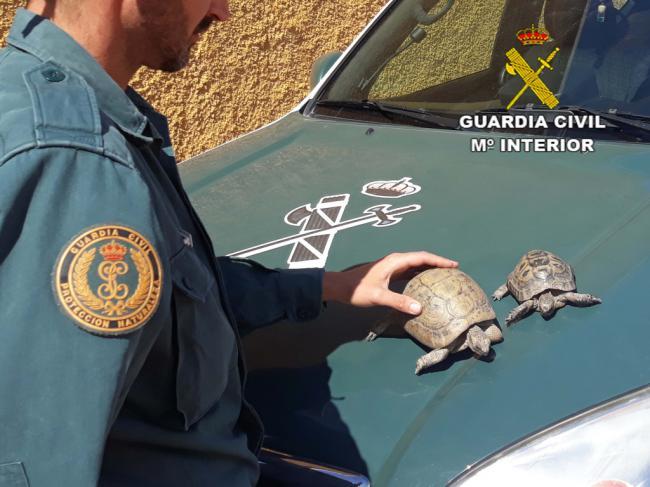 Detenida por tener dos tortugas moras en casa
