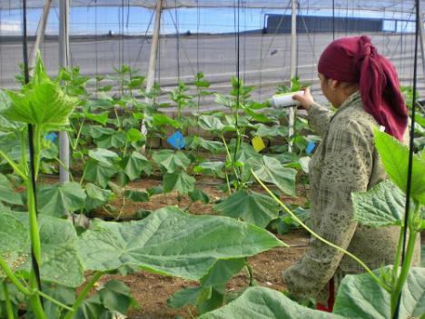 La subida del SMI elevará el coste salarial un 40% en la agricultura