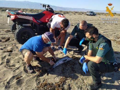Recuperan un delfín varado en Almerimar