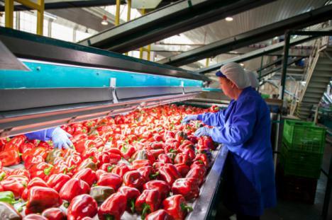 Las exportaciones hortícolas de Almería suponen la mitad de Andalucía