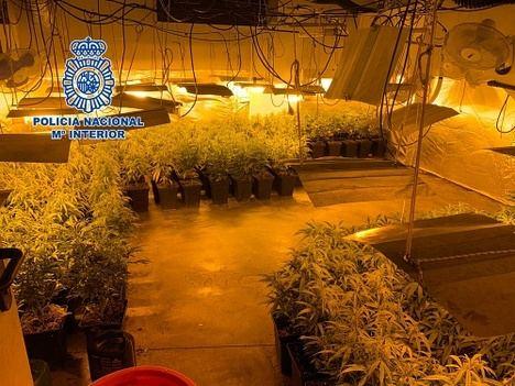 Detenida una familia con dos plantaciones de marihuana