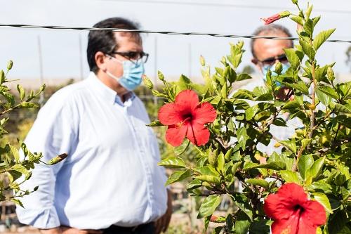 El 'Plan Savia' embellecerá Almería con 60.000 plantas