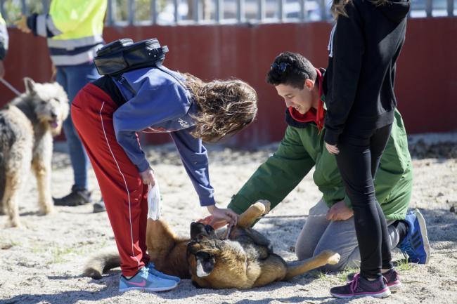 Almería será ciudad libre de circos con animales salvajes