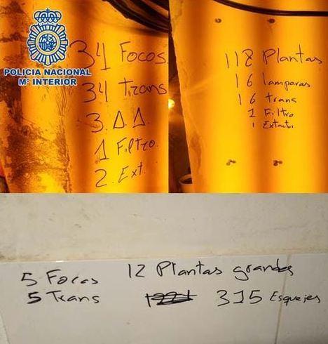 Cuatro viviendas de la Junta entre las 10 dedicadas factoría de marihuana en El Puche