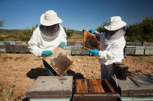 Solo cuatro almerienses recibirán ayudas por apicultura