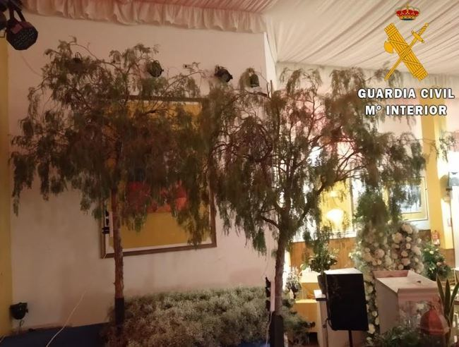 Corta tres árboles en una calle de Benahadux para decorar un salón de bodas