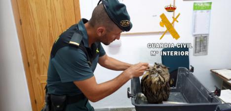 La Guardia Civil libera a un Búho Real enganchado en una alambrada de Albox