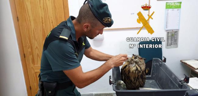 La Guardia Civil libera a un Búho Real enganchado en una alambrada de Albox