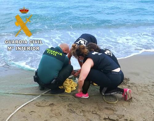 """Guardia Civil y Equinac liberan un """"Cormorán Moñudo"""" atrapado en una red en playa Macenas"""