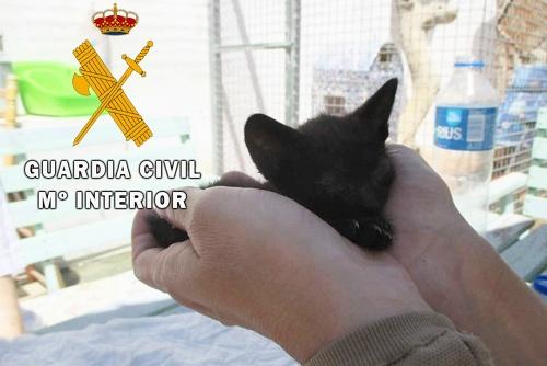 La Guardia Civil auxilia dos gatitos abandonados en Roquetas de Mar