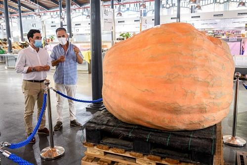 El Mercado Central exhibe una calabaza gigante de 456 kilos cultivada en Almería