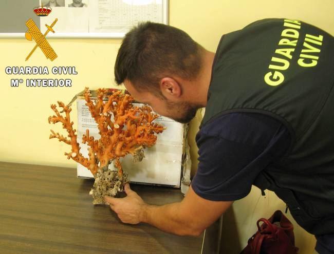 La Guardia Civil localiza en el puerto de Almería 2 kilos de coral rojo