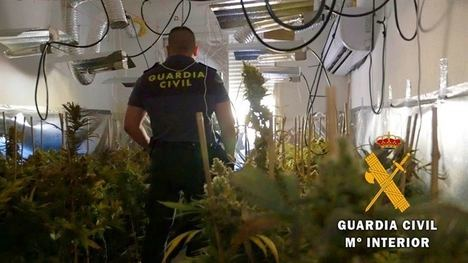 La Guardia Civil localiza 650 plantas de marihuana en una vivienda de Roquetas de Mar