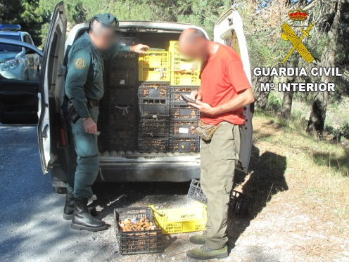 "La Guardia Civil interviene más de 50 kilos de ""Rebollones"""