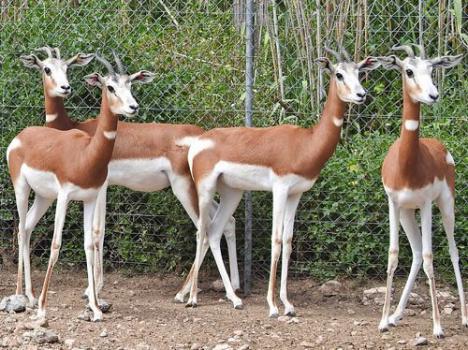 Se cumplen 50 años de la creación del Parque de Rescate de Fauna Sahariana