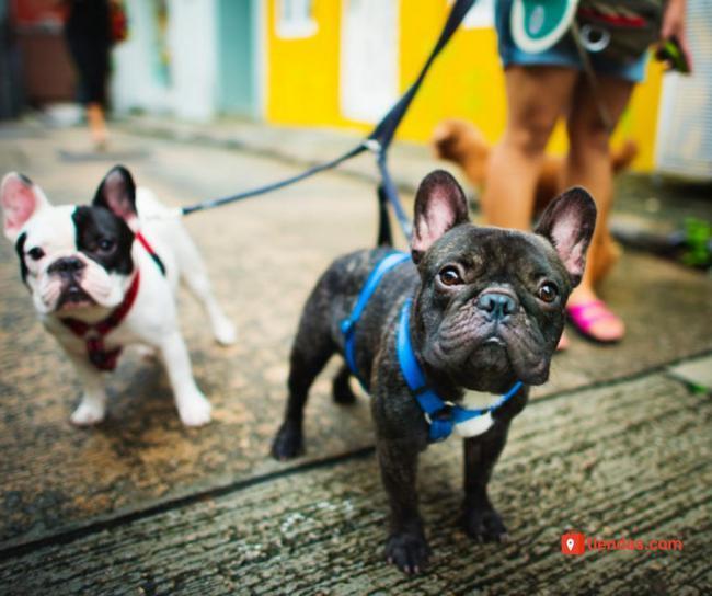 Beneficios para la salud de las personas que aporta convivir con una mascota