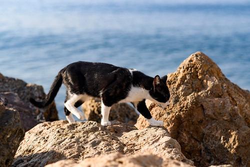 El Ayuntamiento el método CES/CER en la nueva Ordenanza de Animales